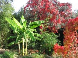 otoñotropical